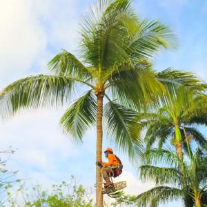 palmtreetrimming